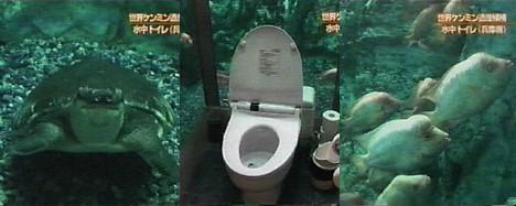 aquarium_toilet.jpg